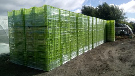 cajas de verdura parque agrario de fuenlabrada Huerta de Madrid